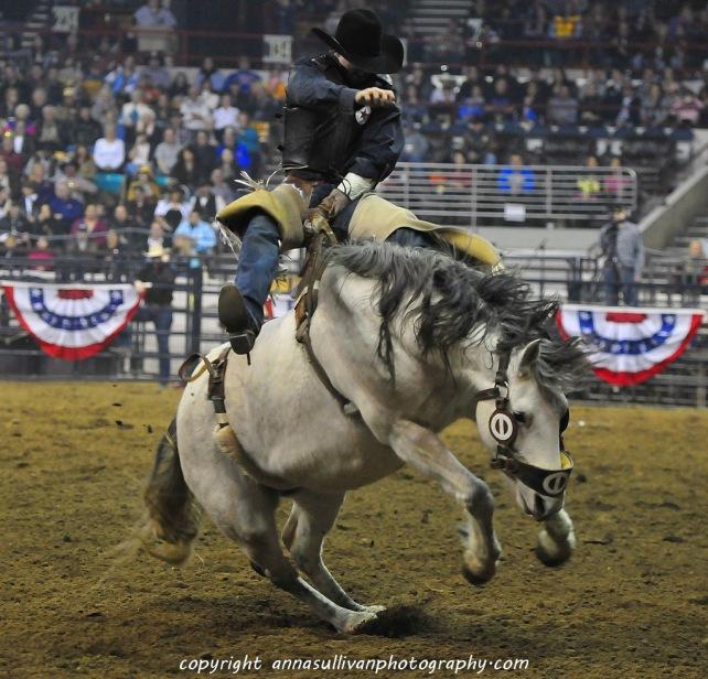 Rodeo_DSC9485