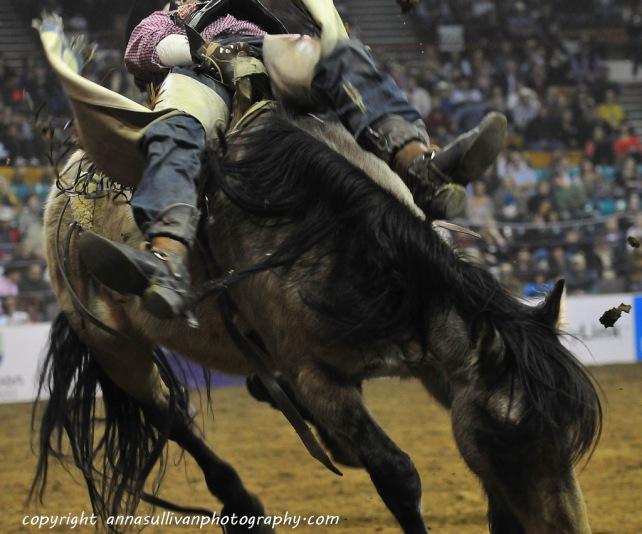 Rodeo_DSC9553