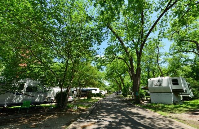 TX Pecan Grove_2273