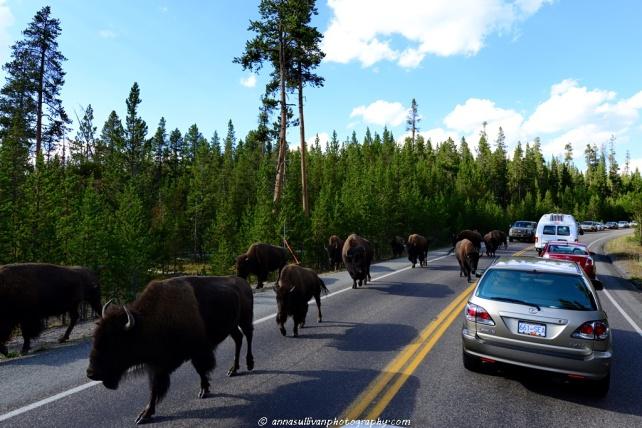 WY Yellowstone_8696