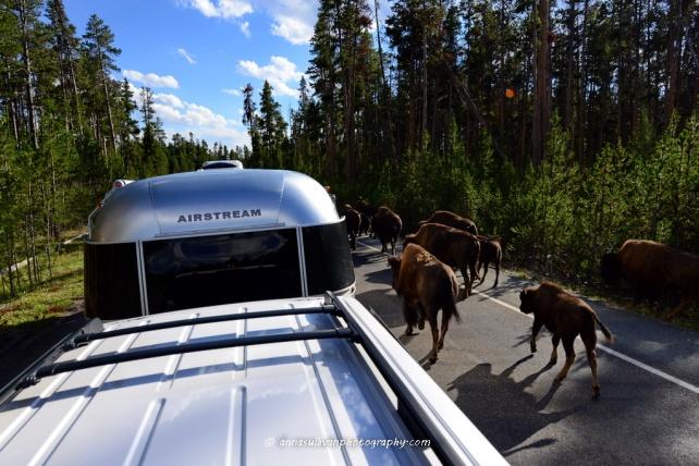 WY Yellowstone_8719