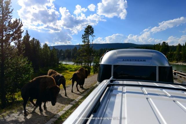 WY Yellowstone_8757