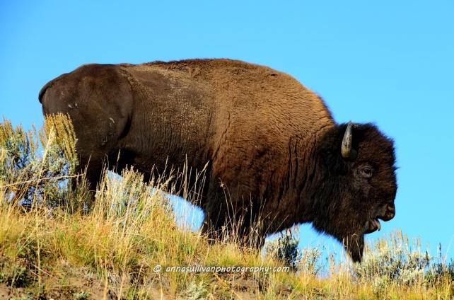 WY Yellowstone_0816