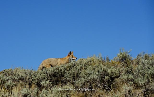 WY Yellowstone_8813