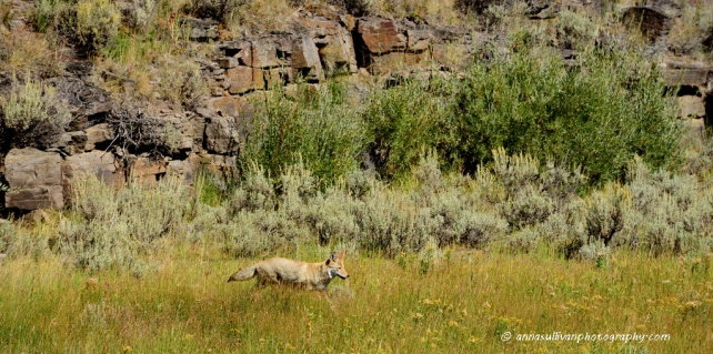 WY Yellowstone_8818
